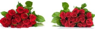Цветы252s