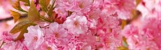 Цветы284s