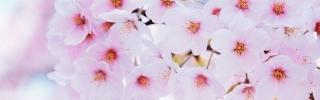 Цветы302s