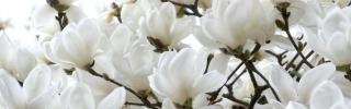 Цветы303s