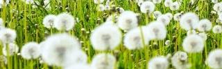 Цветы328_1s