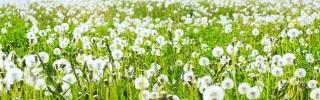 Цветы328s