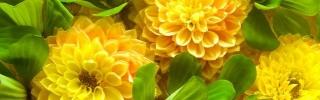Цветы371s
