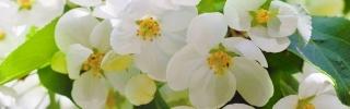 Цветы376s