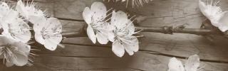 Цветы383_1s