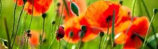 Цветы058s