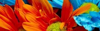 Цветы390s