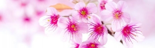Цветы479s