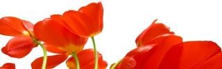 Цветы481s