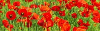 Цветы061s