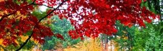 Природа059_1s
