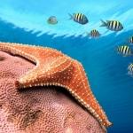 Море055