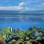 Море056