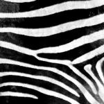 Фоны и текстуры049